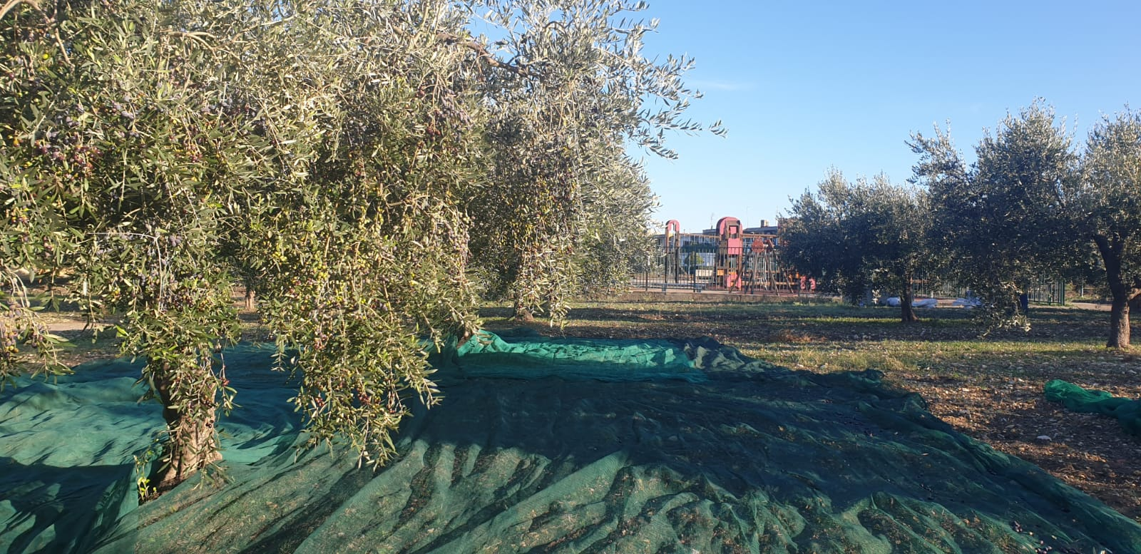 Orto Botanico Olive 2